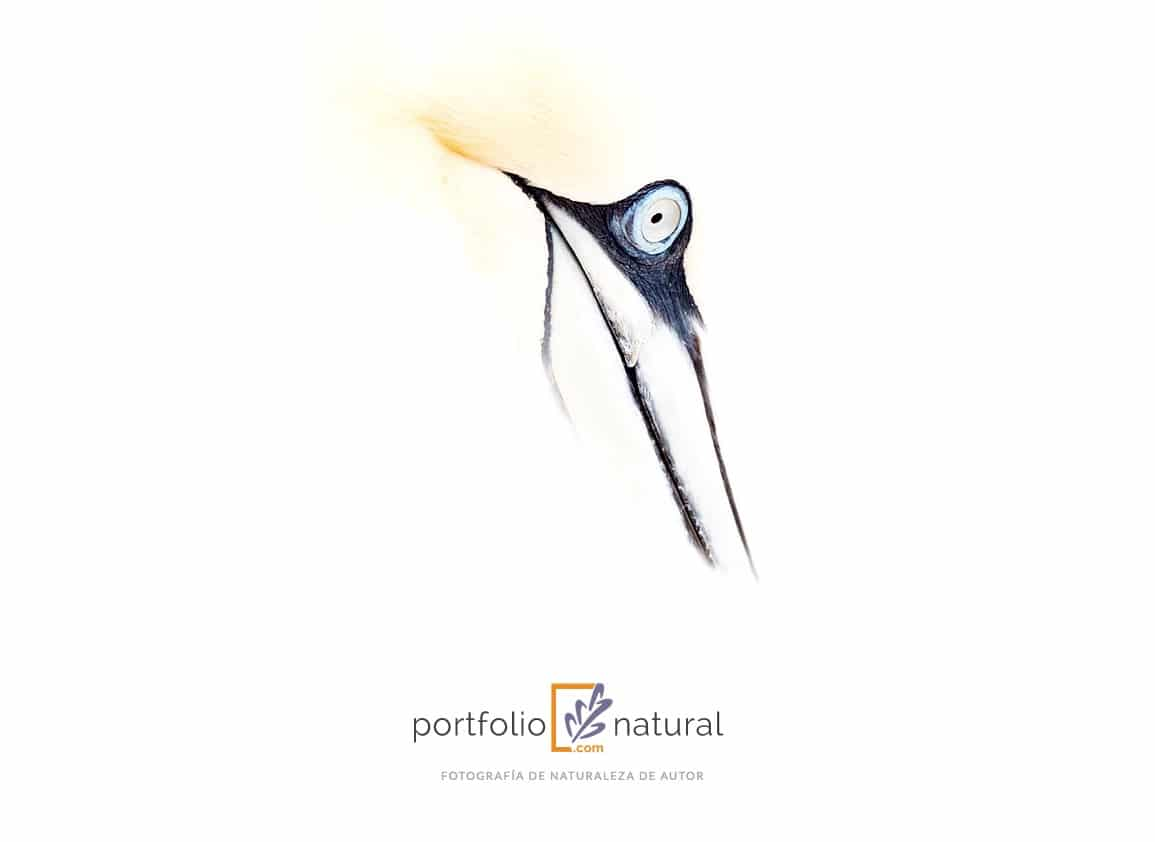 Creamos con Bluekea la nueva web de Portfolio Natural