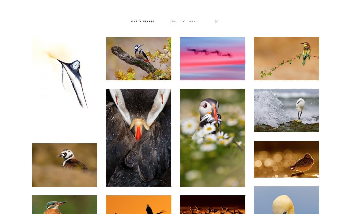Nueva web de Portfolio Natural en Bluekea. Vista de Galería